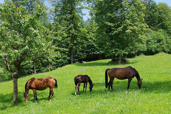 horse-744309_1920