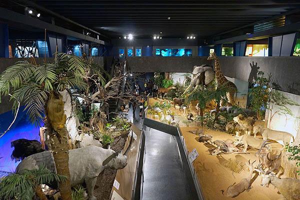 Le Museum d'histoire naturelle de Genève - Classes Découverte Jura